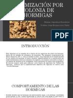 Optimización Por Colonia de Hormigas