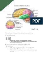 Cerebral Palsy Anatomy