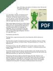 Frog's Anatomy