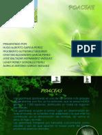poaceae-121126133025-phpapp02.pdf