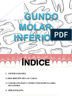 Wuolah-segundo Molar Mandibular Def (1)