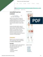 Sistemul Nervos Central _ Anatomie Si Fiziologie