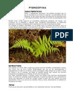 Informacion Plantas