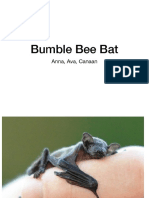 umble bee bat