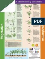 Fenologia Sorgo (IPNI).pdf