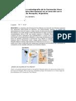 Sedimentología y Estratigrafía de La Formación Vaca Muerta