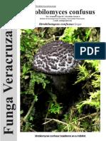 Strobilomyces confusus FUNGA VERACRUZANA 164.