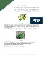 plantas-medicinales.doc
