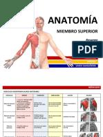 Resumen-Miembro-Superior-Músculos.pdf
