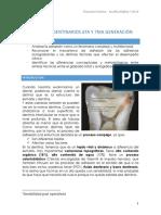 15. Adhesivos Dentinarios 6ta y 7ma Generación