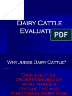 dairycattlejudging.ppt