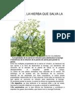 La Salvia, La Hierba Que Salva La Vida