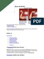 Istilah gerakan anatomi