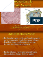 Célula vegetal clase2-1.ppt