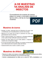 Toma de Muestras Para Analisis de Insectos