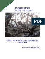 Descripción de la Biología del Camaleón
