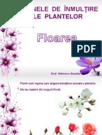 Floarea -  Alcătuire și Funcții