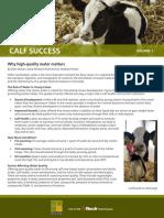 Calf Success