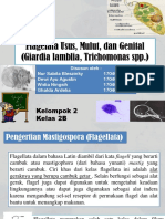 Flagelata Usus, Mulut, Dan Genital