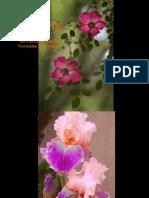 Flowers for presentation
