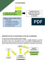 Producción primaria, Energética de los ecosistemas