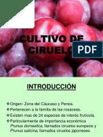 241511998-PresentacionCIRUELA.pdf
