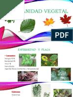 Sanidad vegetal.pptx