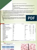 Anemia Macrocítica