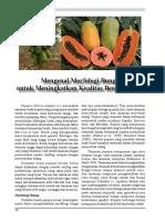 13. Tri Papaya
