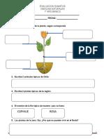 Evaluacion Sumativa Plantas y Animales