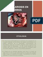 Dirofilariosis en Perros
