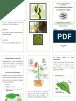 TRIPTICO EXCRECION EN LAS PLANTAS.docx