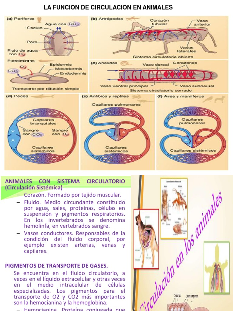 ejemplos de circulación sistémica