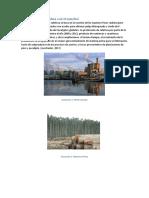 Produccion de La Celulosa a Nivel Mundial