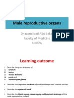 Male Reproductive Organs 2018
