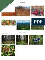 Biomas Frios, Templados Calidos, Medicina Natural y Convencional, Tecnologia Sonora Patrimonios Culturales Tangibles e Intangibles de Guatemala Subempleo