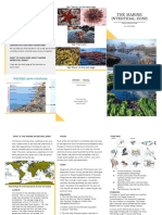 Alex's Marine Intertidal Brochure