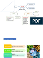 Resumen micrrorganismos