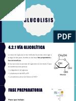 4.2 Glucolisiss