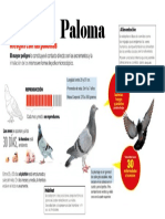 Infografía de La Paloma