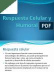 respuestacelularyhumoral-140210215438-phpapp01