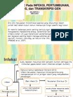 KELOMPOK 2 PERAN ZINC.pptx