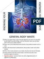 Knowing your Kidneys