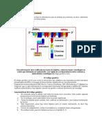 Traduccion, codigo genetico biologia