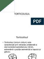LP2_Torticolisul