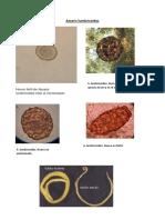 Imagenes de Lab de Parasitologia