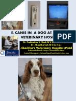 E.canis in a Dog at Jibachha Veterinary Hospital by Dr. Prabhakar K.Shah