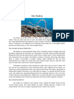 Factual Report Sea Snake