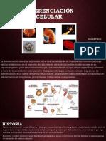 Diferenciación Celular..pptx (1)