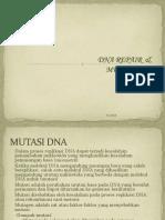 11_mutasi Dna & Dna Repair 2011